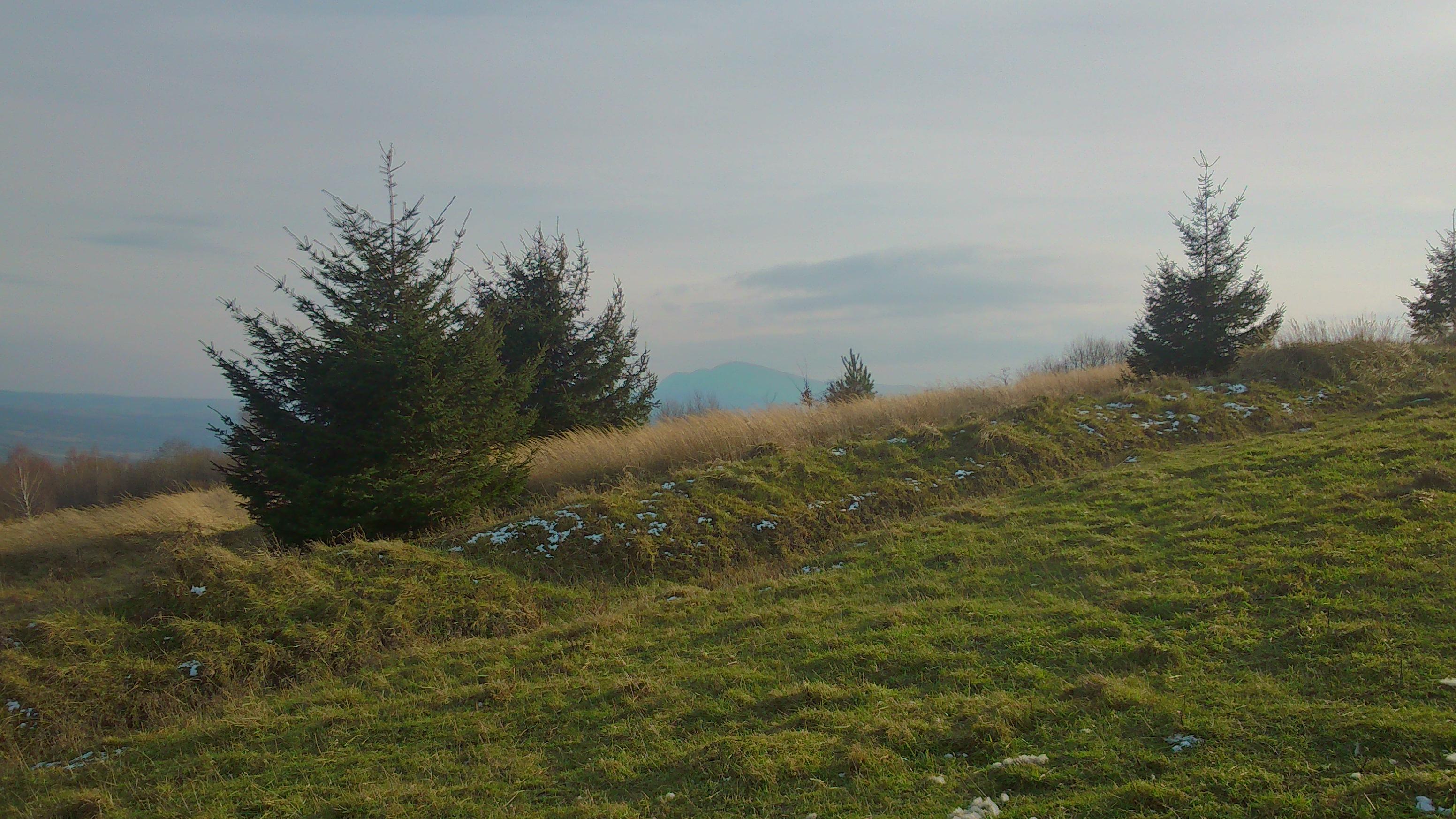 Cergowa (716 m n.p.m.) – zalesiony szczyt w Beskidzie Niskim
