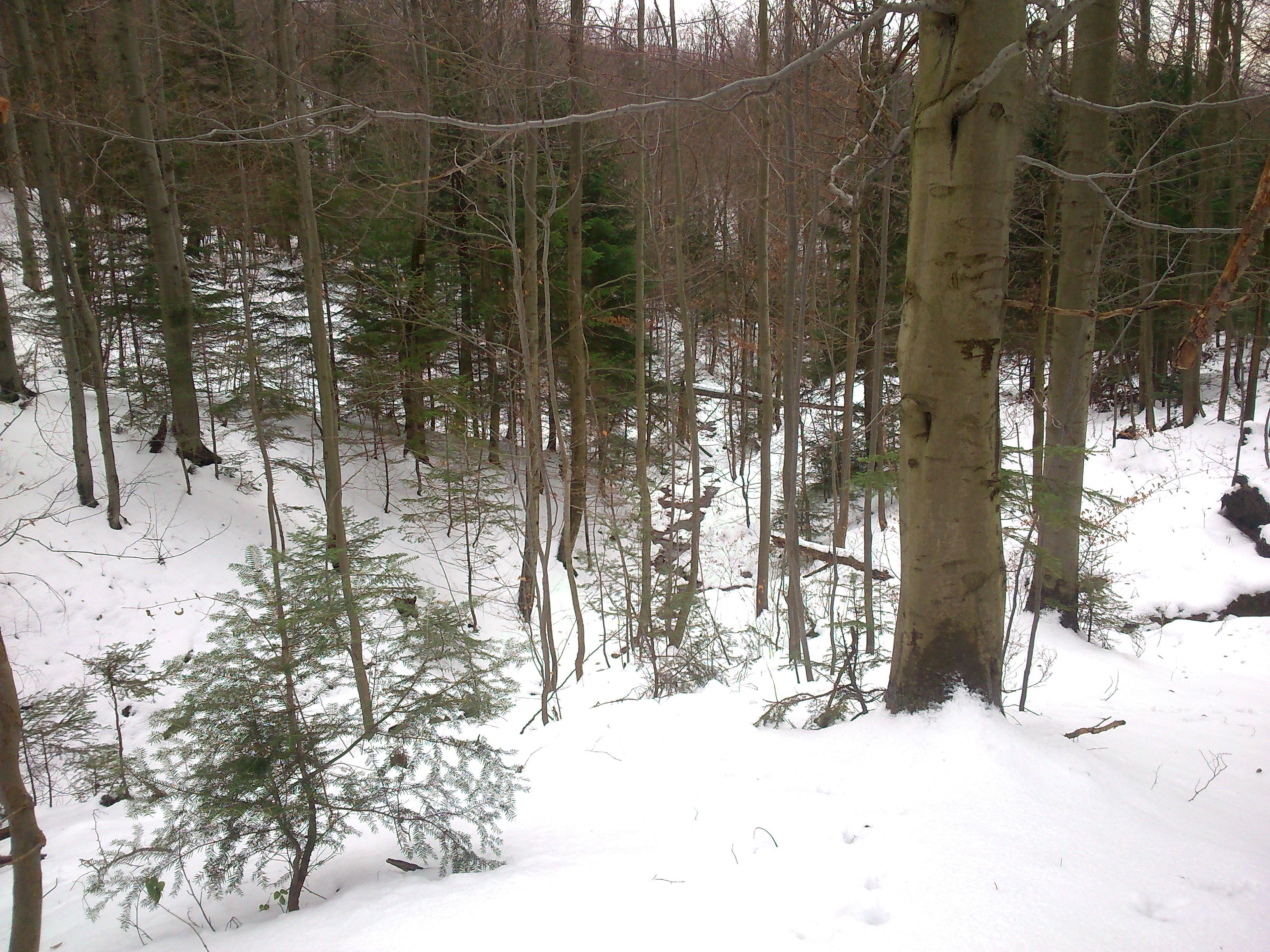 W dół potoku można zjechać po śniegu, gorzej jest wspiąć się pod górę